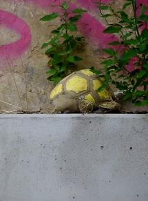 Ballon tortue