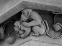 des singes pas très catholiques